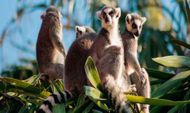 Top 10 Tourist Attractions in Madagascar | Best Places in Madagascar